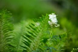 Fin vit blomma omgiven av grönt.